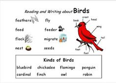 FREE word chart for writing about the birds at your classroom window