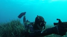 Search videos for spearfishing on Vimeo