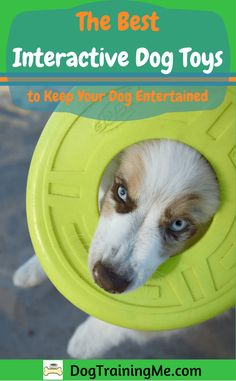 The best interactive dog toys will provide a challenge for your dog, physically and mentally. They will stop your dog from getting bored, keep them moving and stimulate their brains. Check out our recommendations in our article.