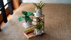 Diy Plant Stand, Miniature Plants, Types Of Plants, Miniatures, Planting Flowers, Planter Pots, The Creator, How To Make, Simple