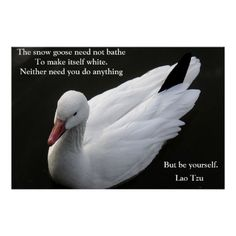 Snow Goose with Lao Tzu Quote Poster Animal Spirit Guides, Spirit Animal, Siberia, Alaska, Snow Goose, Make Your Own Poster, Modern Artwork, Quote Posters, Do Anything
