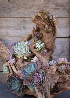 Déco bois flotté & plantes succulentes ou quand la nature s'empare de notre habitat !