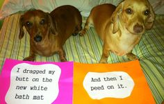 Hilarious Roundup Of 45 Guilty Dog Pics And Their Reactions To Being Busted
