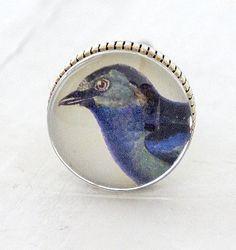 Kastknop Vogel Blauw
