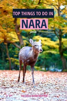 Nara Day Trip - Check how you can plan your day trip to Nara from Osaka or Kyoto, the beautiful heritage listed town in Japan blessed with nature & temples. Japan Travel Guide, Asia Travel, Travel Guides, Nara Japan, Stuff To Do, Things To Do, Buddhist Art, Mongolia, Bhutan