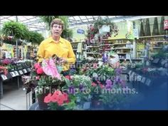 How to Create a Spring Container Garden with Stauffers! Learn how to make a container garden with Stauffers expert advice on how to create, care and choose plants for your planter, porch pot or window box. Find a Stauffers of Kissel Hill Garden Center location near you at www.skh.com