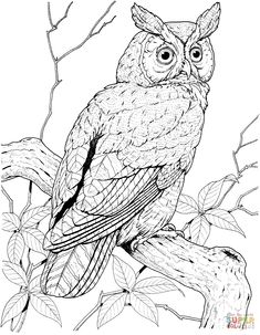 Perched Long Eared Owl Coloring Pages Printable and others free printable coloring pages for kids and adults! Farm Animal Coloring Pages, Cat Coloring Page, Coloring Books, Free Printable Coloring Pages, Coloring Pages For Kids, Owl Pictures To Color, Bird Drawings, Animal Drawings, Long Eared Owl