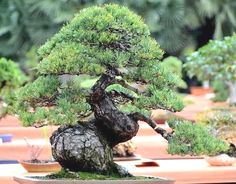 ֍ᴥA little #bonsai inspiration for today!☼֍       #BonsaiInspiration