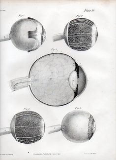 Eye, from The Anatomy of the Arteries of the Human Body, by Jones Quain and Richard Quain, 1844.