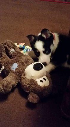 Vega and her bear Brian