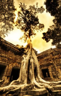Swallowing the Ruins – a remote temple of Angkor Wat in Cambodia