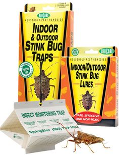 Stink Bug Trap and Lures.......I need some of these for inside & outside.I also need to find out how to get rid of their smell