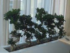 Truhlíky na bonsaje Plants, Plant, Planets