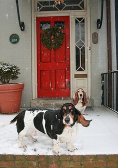 Snowing at Basset Manor.