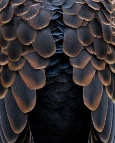 Dark Ombre Feathers - natural textures - organic pattern source for bird-inspired design; nature's artwork: