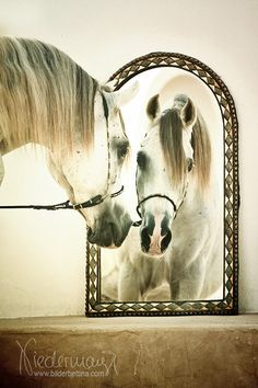 Mirror Mirror Bilderbettina-Fotografie