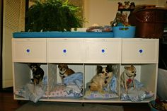 Chihuahua dog bed we designed and made for them included drawers for their clothes and accessories.