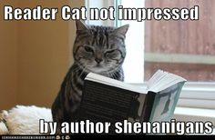 Reader Cat not impressed
