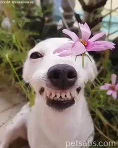 Got a Dog problem and About to Give up? Cute Funny Dogs, Cute Funny Animals, Cute Cats, Happy Animals, Animals And Pets, Cute Puppies, Dogs And Puppies, Doggies, Funny Animal Jokes