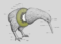 the flightless bird, kiwi, drawn with a kiwi as a stomach. haha, love it!