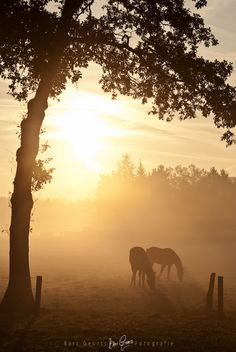 Horses at sunset! by Bart Geurts  If you love horses: ~~~> www.happyhorsehealthyplanet.com