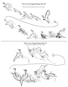 Animation Sketches, Animation Reference, Drawing Reference Poses, Art Reference, Wings Drawing, Angel Drawing, Gesture Drawing, Dragon Anatomy, Dragon Sketch