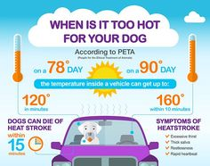 30 Infographics that can Save Your Pet /// Pet Safety Tips + Free Printable Pet Emergency Sticker Dog tips for every dog parent, top Pins about dogs. Feel free to comment, if you liked or tried the pin. Fire Safety Tips, Dog Safety, Dog Health Tips, Pet Health, Heat Stroke In Dogs, Animal Nutrition, Pet Nutrition, Nutrition Guide, Pet Safe