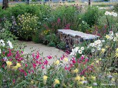 Ecologische bedrijfstuin - Ecological company garden  #insecthotel #prairiegarden Ontwerp - design: Iverna Zaalberg  Natuur bij huis 2014/2015  Foto: 2016-06  Locatie: Geelen Counterflow Haelen NL
