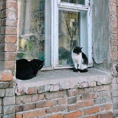 ♥ CÅt§ in =^.^= the window