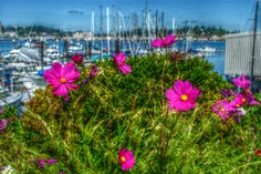 Port Orchard WA, Marina in the summer