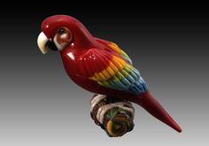 Scarlet Macaw   KIM FIELDS