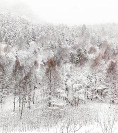 Tutto bianco nel Gran Bosco  #myValsusa 09.02.17 #fotodelgiorno di Parchi Alpi Cozie