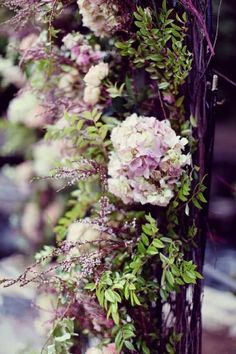 climbing hydrangea..have never seen this variety before..remind me of wisteria