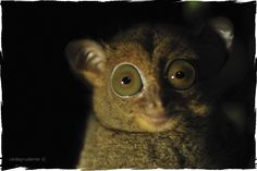 "Cede Prudente Blog ""Wildlife Photographer in Borneo"""