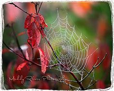 Spider web by Muddy River Photography