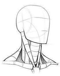 Neck Drawing, Human Anatomy Drawing, Drawing Heads, Human Figure Drawing, Figure Drawing Reference, Body Drawing, Anatomy Art, Anatomy Reference, Art Reference Poses