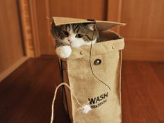 Cat ready for washing