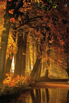 Photo Roos Gast | #herfst #autumn #trees #bomen #fotografie by Roos Gast #photography #indian_summer #bos #woods #wood #nature #natuur #netherlands #Nederland