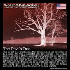 The Devil's Tree - Just outside of Bernards Township, New Jersey - 'World of the Paranormal' are short bite sized posts covering paranormal locations, events, personalities and objects from all across the globe. Scary Creepy Stories, Spooky Stories, Creepy Facts, Wtf Fun Facts, Ghost Stories, Horror Stories, Scary Stuff, Strange Stories, Scary Things