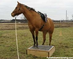 Natural horse training can enhance your relationship with your horse and help fill some possible gaps in the horse's foundation. Tips - How To's - Anatomy - Western Riding