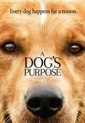 Rent A Dog's Purpose starring Josh Gad and Dennis Quaid on DVD and Blu-ray. Get unlimited DVD Movies & TV Shows delivered to your door with no late fees, ever. Comedy Movies, Hd Movies, Movies To Watch, Movies Online, Movies And Tv Shows, Movie Film, Movie Club, Cinema Movies, Movie Props