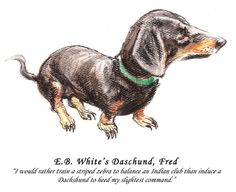 Author's Best Friend: E. B. White's daschund, Fred.