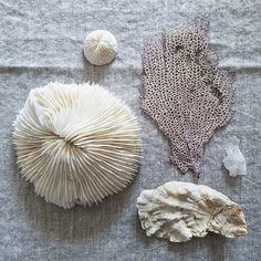 Things from the sea evoke calm and stillness. Nature sure does it right. There's not much else to say! . . #inspiredbynature #simplenaturefinds #curated_nature #propstylist #inmypropcloset #ofthesea #byarrangement #shells #thepropstylingexperience #natureflatlays #pursuepretty #seedscolor#seekthesimplicity #ardentfinds #dslooking #livethelittlethings #verilymoment #momentslikethese #flashesofdelight #mytinyatlas #feelfreefeed #simpleandstill #theartofslowliving #vsco #stylingtheseasons…