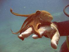 Octopus on hand