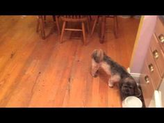 Dog Attacks The Cat Whenever The Owner Gets Ice - #funny #cat #dog