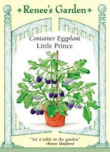Eggplant Little Prince Container Seeds 30 Seeds by Renee's Garden, http://www.amazon.com/dp/B0017JDFZ0/ref=cm_sw_r_pi_dp_ptzUqb02XTPTG