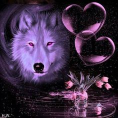 Raven And Wolf, Wolf Love, Wolf Photos, Wolf Pictures, Fantasy Wolf, Dark Fantasy Art, Anime Wolf, Wolf Dreamcatcher, Wolf Husky