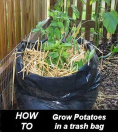 This project for growing your potatoes is so simple and yet very effective. Just combine everything into a large trash bag.