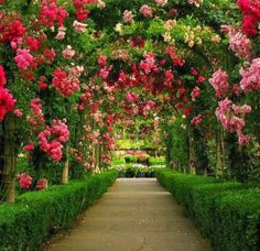7. WHAT YOUR DREAM GARDEN LOOKS LIKE -- Flower Garden tunnel #organic and #gardening