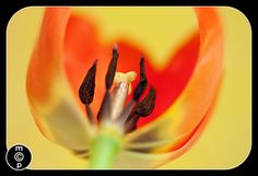 Macro+Photography:+Quick+Tips+to+Get+You+Started